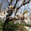 Spring always arrives Early in Paris